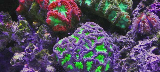 PROTECTING THE GREAT BARRIER REEF